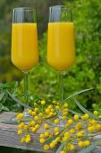 Two glasses of mimosa cocktail outdoors against lush foliage