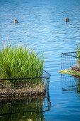 Duckies In Hyde Park
