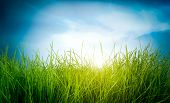 Spring green grass and sun on blue sky background