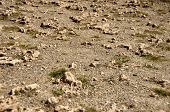 Arid dry sand ground background with little stones