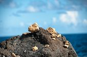 Small cairns and piles of pebbles at the seaside carefully balanced on the rocks overlooking the oce