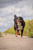 Happy Dog Jumping