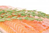 fresh uncooked red fish fillet and rosemary over white