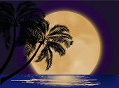 illustration with palm tree silhouette at moon