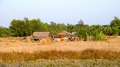 stock photo of farmworker  - Slums in the province in Myanmar  - JPG