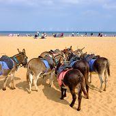 Donkeys on Skegness beach
