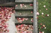 fallen leaves on the steps