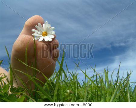 Summertime Foot poster
