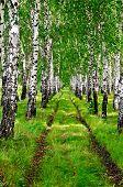 Birchwood a dirt road