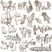 image of descriptive  - Animals around the world  - JPG