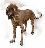 Great Dane (german Mastiff)