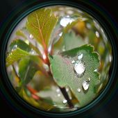 Raindrops On Leaves In Objective Lens
