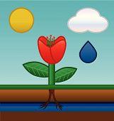 Absorção de água de flor