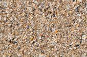 fragments of shells with sand background