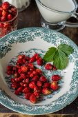 Dish with wild strawberries and leaves on the stump