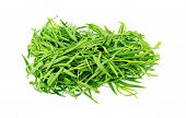 Bunch Of Tarragon Herb Leaves Isolated On White