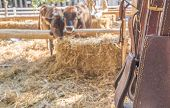 stock photo of riding-crop  - riding horse equipment hang on wooden fence - JPG