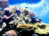 Underwater at Birch