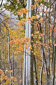 Trees With Fall Color And Snow