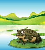Illustration of a frog sitting on a leaf
