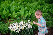 Boy Inspects Easter Lilies During An Egg Hunt
