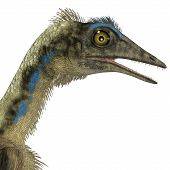 image of carnivores  - Archaeopteryx was a reptile carnivorous bird that lived in the Jurassic Age of Germany - JPG