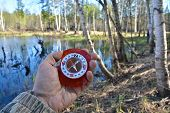 picture of compass  - With compass in a spring forest - JPG