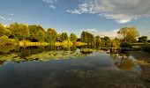 picture of pier a lake  - Rural landscape with pier and lake and reflected trees and water lilies during sunset - JPG