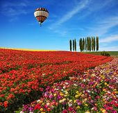 stock photo of buttercup  - Spring  day - JPG