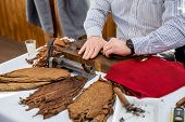 stock photo of tobacco leaf  - Man processing the tobacco leaves and making cigars with simple tools