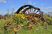 stock photo of weed  - Huge spoked steel wheels of old equipment and machinery are in a pile with wild flowers and weeds growing in their midst - JPG