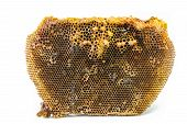 picture of beehive  - Beehive and the red dwarf honey bees  - JPG