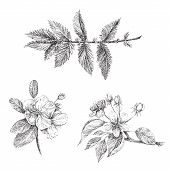 picture of apple blossom  - A set of graphics tattoo - JPG