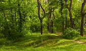 stock photo of spring-weather  - Forest spring in sunny weather - JPG