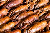 pic of crawfish  - Photo of background with red boiled crawfishes - JPG