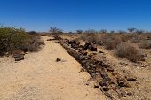 picture of petrified  - A view of petrified tree from Khorixas Namibia - JPG