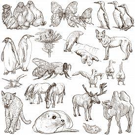 pic of freehand drawing  - ANIMALS around the World  - JPG