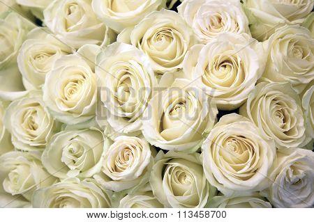 White roses.