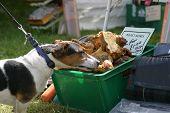 Dog Stealing Bones