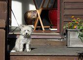 Cute Dog Waiting poster