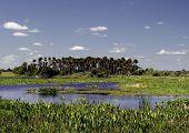 Wetlands And Pickerel