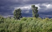 pic of hurricane wind  - trees and grass bendings under act of high wind on a background a storm sky - JPG