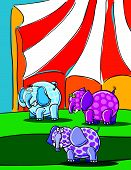 Elephants And Circus