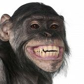 foto of chimp  - Close - JPG