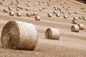 Rollen von Hay