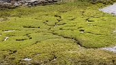 The green bog crossed by small streams