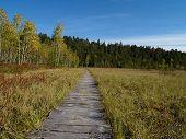 Wooden Way