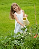 Little girl watering vegetable garden