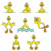 Cute Duck Set