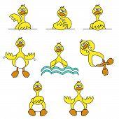 Cute Duck Set